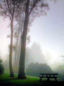 picnic-mist.jpg