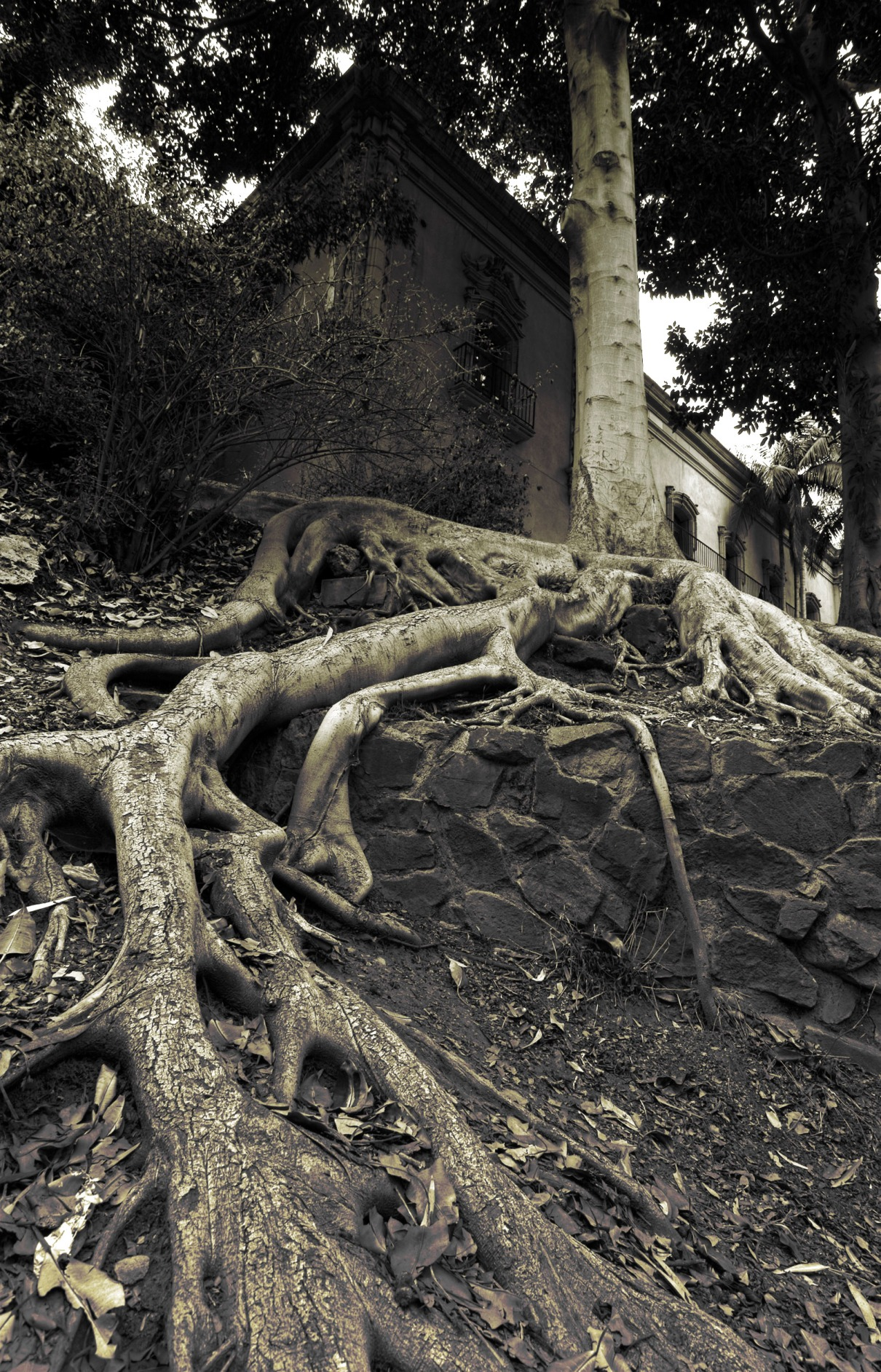 scary-roots.jpg